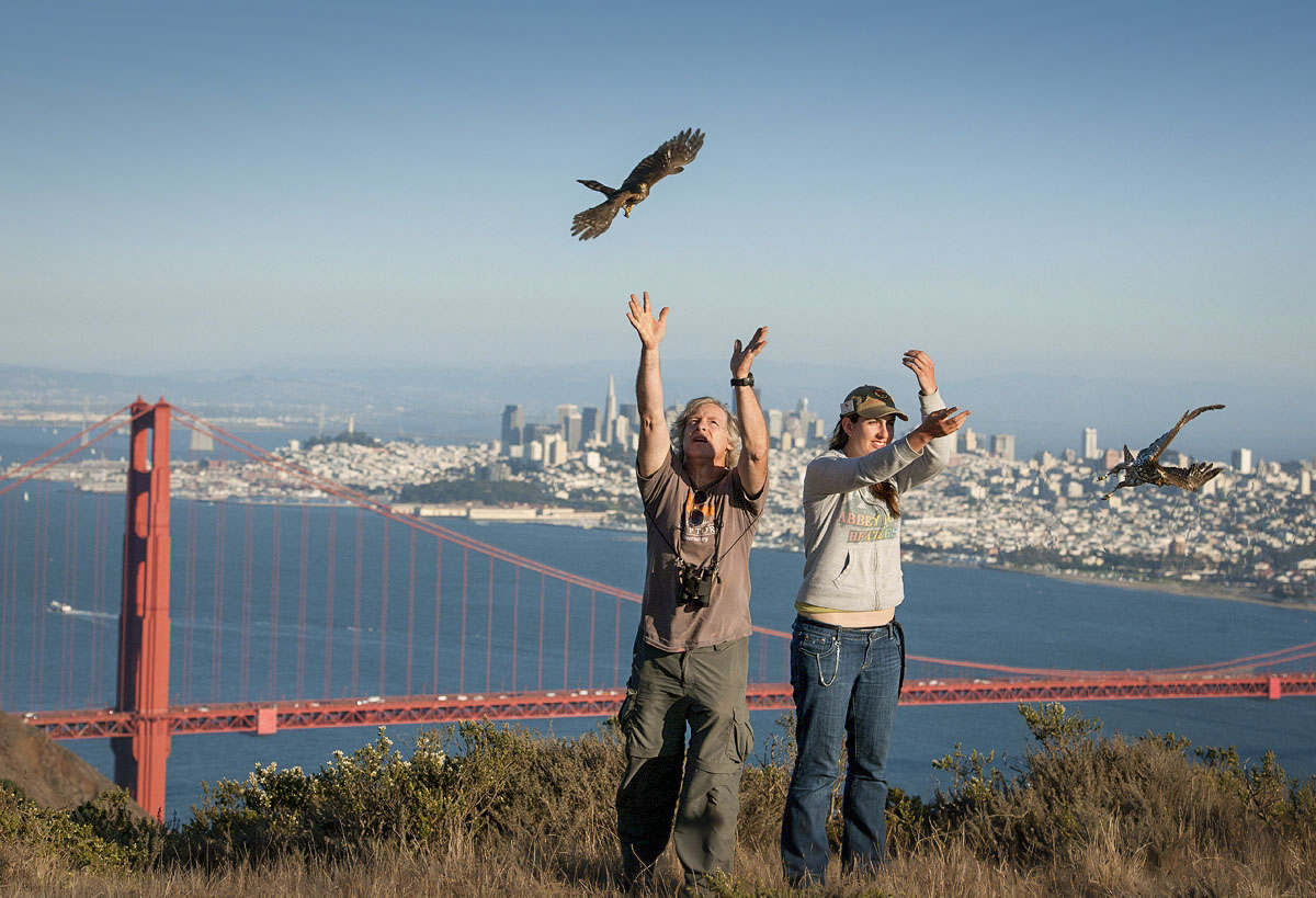 Falcon Accipiter Buteo – A 35-Year Review of Community Science at the GGRO