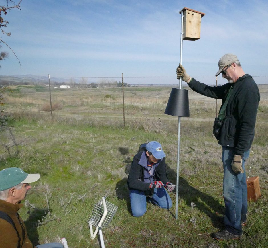 YAS Board Members Michael Perrone, Sonjia Shelly, and John Hansen installing bluebird boxes at Capay Open Space