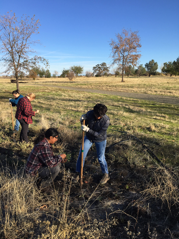 Planting Party at Capay Open Space Park