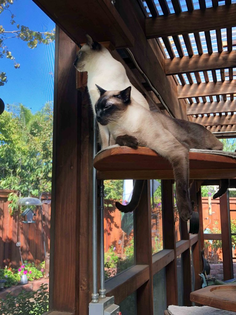 The 'catio' keeps cats and birds separated; © Lynda Goff