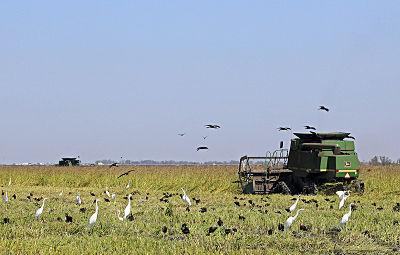 Avian Conservation in California's Central Valley