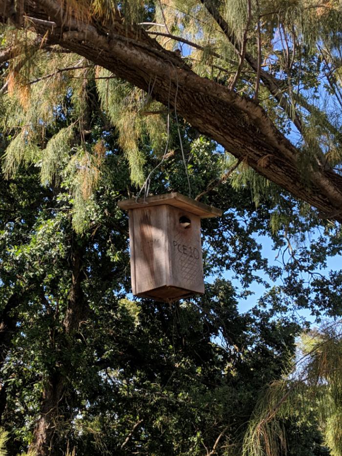 Tree Swallow Nestbox. Hanika Cook