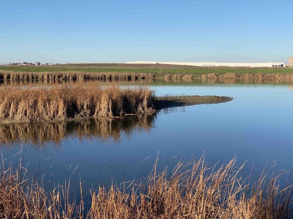 Bridgeway Island Pond; © Ann Brice
