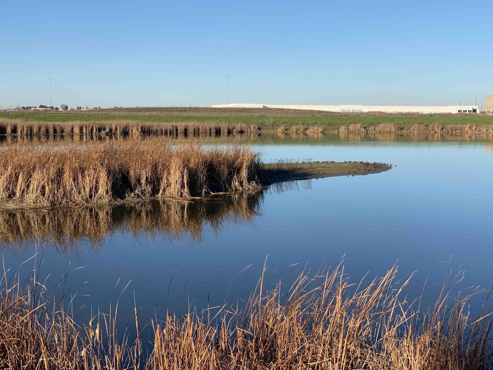 Bridgeway Island Pond meets Industrial Development