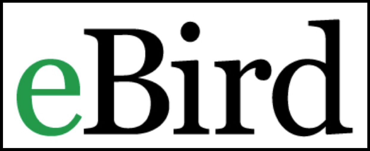 eBird: Every Bird Sighting Matters