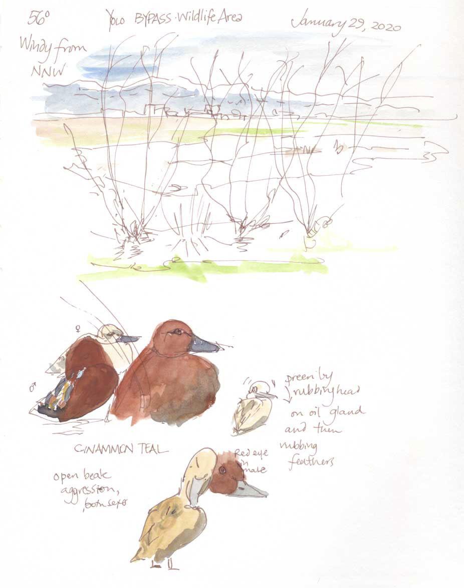 Nature Journaling Workshop at California Duck Days