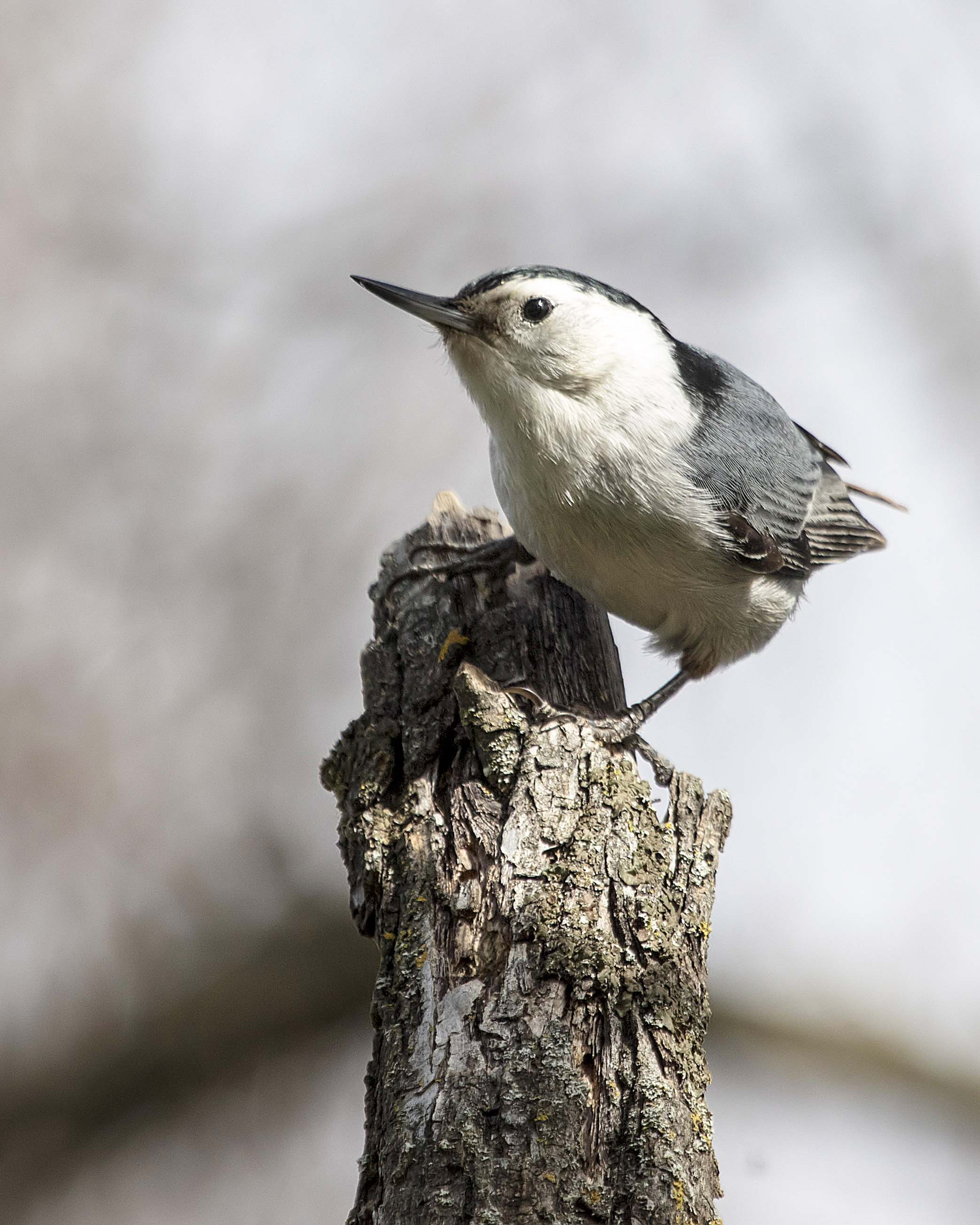 Bird Trends at the Putah Creek Riparian Reserve